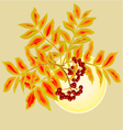 Twig rowanberry with leaves and berries and sun vector image vector image