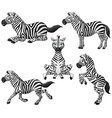 zebra cartoon set collection vector image vector image