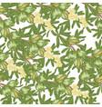 argan tree argania seamless patern green nuts vector image vector image