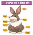 Diagram showing parts of rabbit vector image vector image