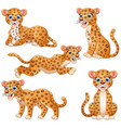 leopard cartoon set collection vector image
