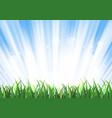 spring or summer sunrise grass landscape vector image