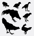 chicken and rooster poultry animal silhouette vector image vector image