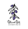 olive branch with olive leaves hand drawn and vector image