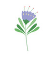 purple flower stem leaves nature decoration vector image vector image