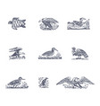 set of animal vector image