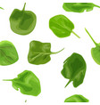 spinach fresh juicy raw leaves seamless vector image vector image