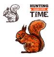 squirrel wild animal sketch vector image