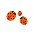 the funny family of ladybirds is isolated on a vector image vector image