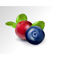 blueberries and cranberries with leaves quality vector image vector image