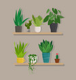 green indoor house plants in pots on the shelf vector image vector image