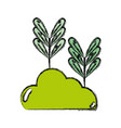 natural plants with leaves and botanic bush vector image
