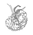 peony flower isolated on a white background vector image
