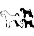 terrier dog vector image vector image