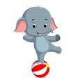 a baby circus elephant balancing on a big ball vector image