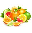 Citrus Fruits Collection Realistic Composition vector image vector image