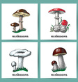 Mushrooms banner collection vector image