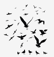 pack of seagulls vector image vector image