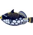 tropical fish balistoides conspicillum vector image