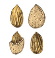 hand drawn almonds vector image