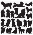 maltese-dog silhouettes vector image vector image