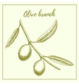 Olive branch hand drawn sketch vector image vector image