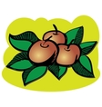 red apples with green leaves vector image