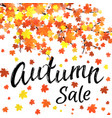 autumn sale lettering banner design vector image