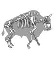 engraving of bison skeleton vector image vector image