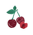 fresh whole and half sweet cherry flat vector image vector image