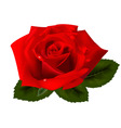 red rose vector image vector image