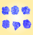 Set of blue roses symbol of love vector image vector image