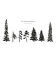 black silhouettes of fur-trees and pines vector image