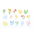 collection herbs and wildflowers on white vector image