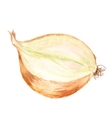 half of onion vector image vector image