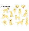 labrador in action vector image vector image