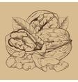 Walnut isolated on white background vector image vector image