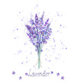 watercolor lavender bouquet lavender flowers vector image vector image