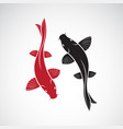 carp koi fish isolated on white background pet vector image