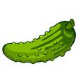 cucumber vector image vector image