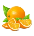 Fresh ripe oranges vector image vector image