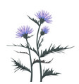 thistle with leaves vector image vector image