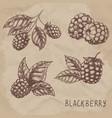 set drawing blackberry raspberry vector image vector image