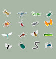 set of different insects vector image vector image