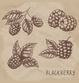 set of drawing blackberry raspberry vector image vector image