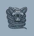 twisted viper monochrome tattoo style vector image