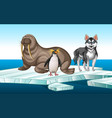 walrus and penquin on iceberg vector image