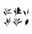 graphic leaves vector image vector image