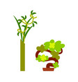 green plant in vase and small winding tree vector image