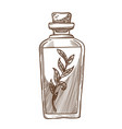 olive oil with plant branch in glass bottle with vector image